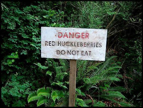 Danger - don't eat the huckleberries